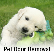 Pet Odor Removal Virginia